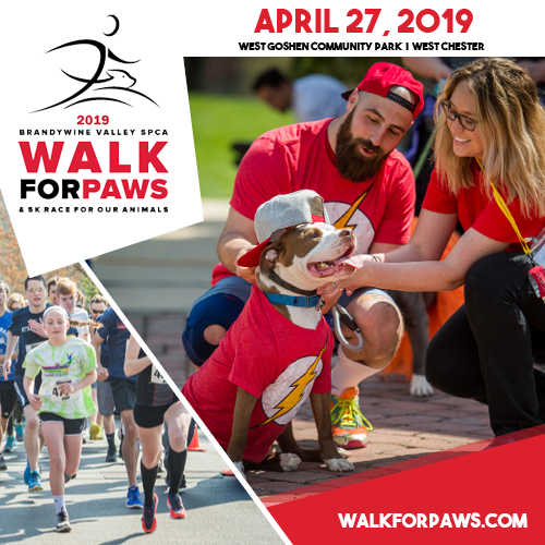2019 Walk for Paws Image